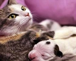 Motherly Cat Helps Save Day-Old Pit Bull Puppy