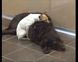 Dumped at a shelter together, these two dogs are inseparable