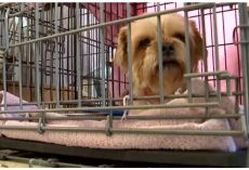 Animal Boarding Facility Reveals House Of Horrors– Over 80 Pets Rescued