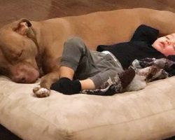 Rescue Dog Senses That His Tiny Human Is Sick And Refuses To Leave His Side