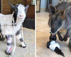Man On Mission To Help Disabled Animals, Makes Prosthetics For 25000 Animals