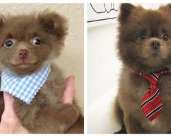 Dog Dumped By Breeder For 'Being Too Big' Becomes Social Media Superstar