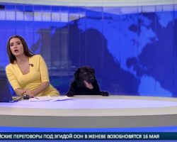 Playful Pooch Pops Up During Live Broadcast, Nearly Startles Anchor Off Her Seat