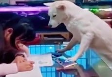 Genius Dad Trained His Dog To Supervise Daughter While She Does Homework