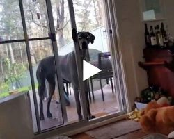 Dog tells his dog it's bath time. His Great Dane knows exactly what to do
