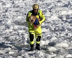 Firemen Rescue Petrified 16-Year-Old Dog Who Was Stranded In Middle Of Icy Lake