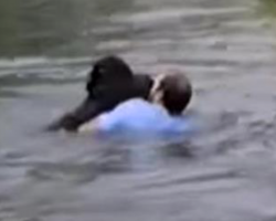 Man Jumps Into Zoo Exhibit When It Becomes Clear No One Else Is Going To Help