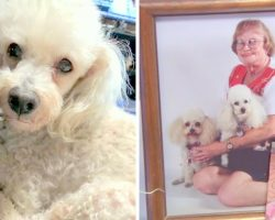 Service Dog Brutally Beaten Up By Robbers, Elderly Owners Forced To Euthanize Her