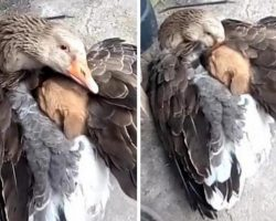 Abandoned Puppy Finds Love And Comfort In The Wings Of A Friend