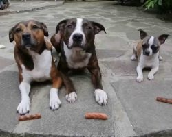Dogs Were Patiently Waiting For Their Sausages, And THIS Happens…
