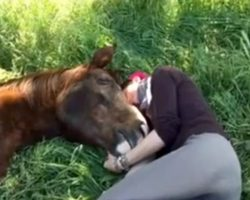 She's Napping In The Grass. You Won't Believe What The Horse Does…