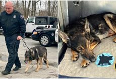 Police K-9 Diagnosed With Terminal Cancer, Honored With Final Ride Through Town