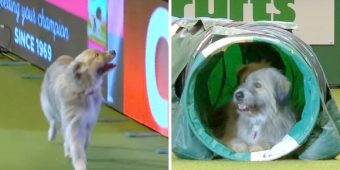 Rescue Dog 'Messes Up' Agility Run, Breaks Every Single Rule But Has The Most Fun