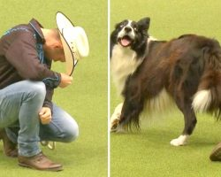 Cowboy & Border Collie Show Great Chemistry, Dazzle Crowd With Their Fancy Moves