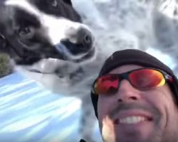 Man Is Asked To Walk The Dog, Figures They Should Go Sledding While Out