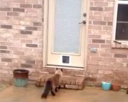 Man Installs A Cat Door Only To Have His Cat Hilariously Surprise Him