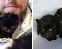 Man hears chirps under his home, finds tiniest little furballs and raises them into magnificent cats