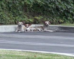 After Being Left On The Streets, These Three Chihuahuas Found Solace In A Fast Food Parking Lot