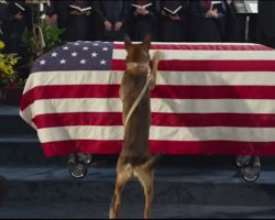 [Video] A Marine Died In Battle, But What His Dog Did After The Funeral? I'm Speechless!