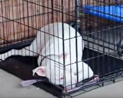 Deaf Dog Is Caught Off Guard When She Spots Her Soldier Dad Coming Toward Her