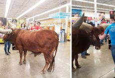"He Called Petco's Bluff On The ""All Leashed Pets Are Welcome"" Rule – Bringing An Unusual Animal Inside"