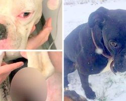 One Dog Mutilated And Another Still Missing, Police Still Searching For Suspect