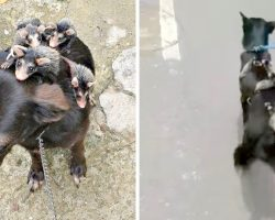 Opossums Are Orphaned After Losing Mom To Attackers, Cling On To A Clueless Dog