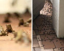 Thousands Of Tiny, Pet-Killing Toads Are Invading A Florida Neighborhood