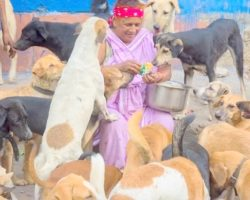Woman Living In A Slum Cares For 400 Stray Dogs, Spends Her Days Feeding Them
