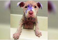 Discarded Pup Covered In Purple Dye Sat At High-Kill Shelter, Awaiting His Fate