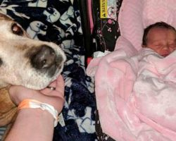 Dying Senior Rescue Dog Held On Just Long Enough To Meet His New Baby Sister