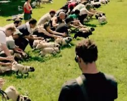 """Toronto Pug Rescue Annual Event – """"Running of the Pugs"""""""