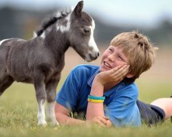 This Boy's Mini Horse Might Be The TINIEST Ever. When I Saw Her, I FAINTED!