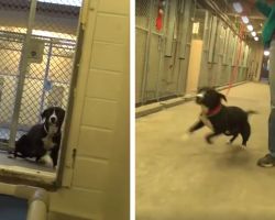 Shelter Dog Can't Hold Back His Excitement When He Realizes He's Being Rescued