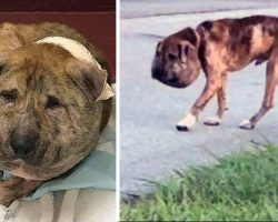 An Evil Person Abused And Deformed Him, But After Surgery, This Dog Is Unrecognizable