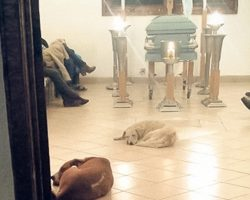 Stray Dogs Show Up To Funeral Of The Woman Who Used To Feed Them