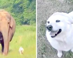 Elephant And Dog Become Best Friends, Then One Day The Dog Suddenly Disappears