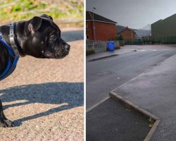Mom-of-3 is about to be raped – then her dog Lola reacts with lightning speed
