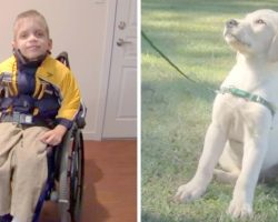 Kid With Cerebral Palsy Had A Hard Life, Then He Met A Very Special Dog