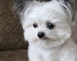 Tiny dog has priceless reaction when he realizes he is getting second treat