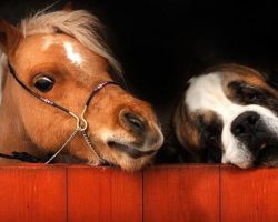17 Tiny Mini Horses Who Have Hearts As Big As Stallions!