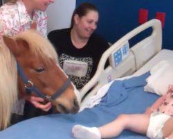 Mini Horse Brings Joy To Children's Hospital