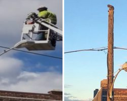 Verizon Suspended Him For 3 Weeks Without Pay After Rescuing A Cat From Utility Pole