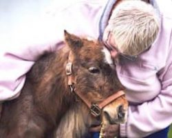 Rescued Miniature Horse Brings Big Smiles As A Therapy Animal