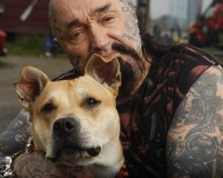 American biker gang destroys dog fight rings and rescues animals from violent owners