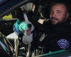Cops Take Shelter Dogs On Rides Around Town To Increase Their Chances Of Adoption