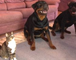 Cat Started Copying This Famous Dog Trick. So Dad Decided To Capture Her Antics On Film