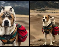 This Cat And Dog Love Traveling Together, And Their Pictures Are Absolutely Epic