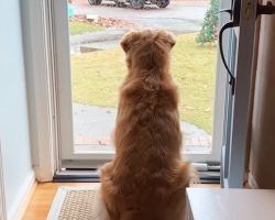 How This Dog Reacted To Local Mailmen Had Mom In Stitches, So She Had To Record It