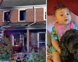 Mom can't save baby from burning building, dog sacrifices his body to save baby's life